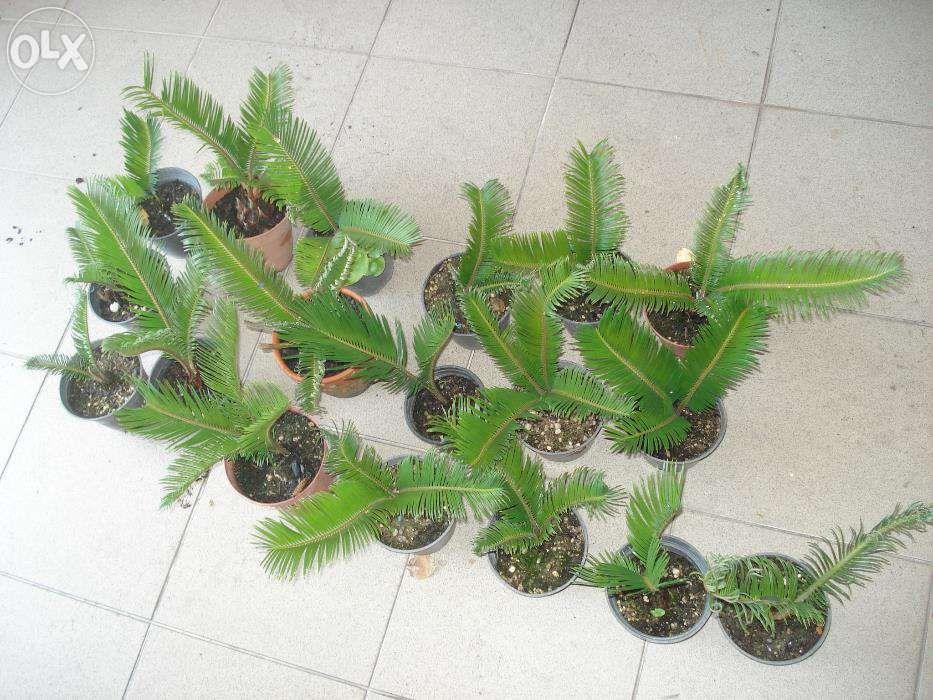 Plantas decorativas