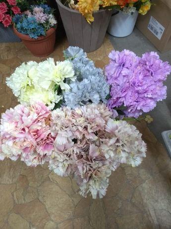 Kwiaty Gozdziki Olx Pl