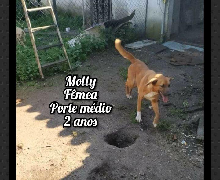 Molly - Fêmea - Porte Médio - 2 Anos