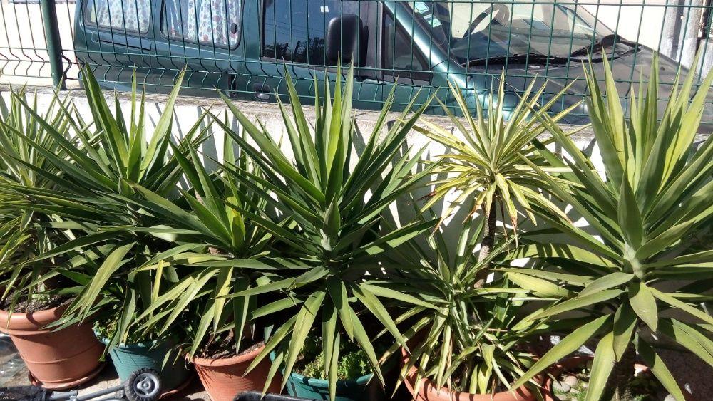 plantas fiteiras Vila Nova de Gaia - imagem 1