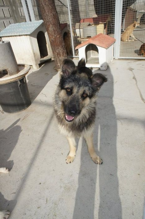 Nero - Cão meigo e sociável