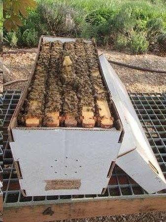 Núcleos e soluções para apicultura 2018