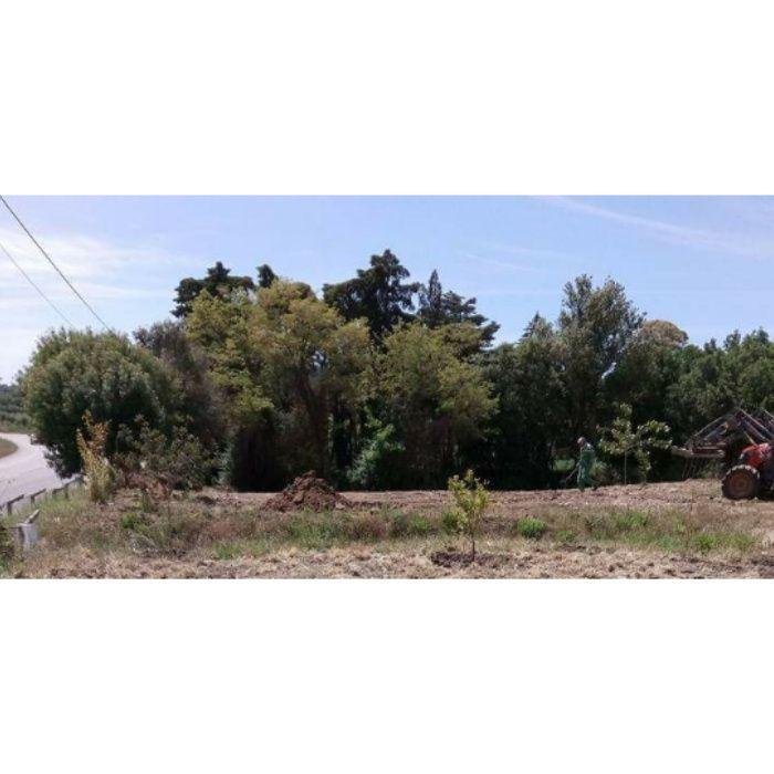 Limpeza de terrenos e quintas
