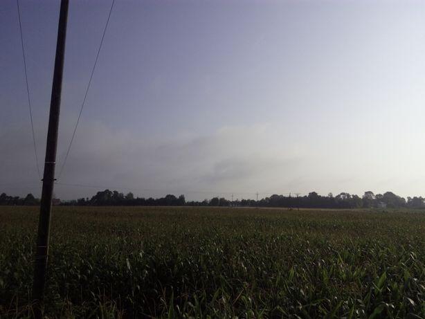 Działka Wrzępia 3,03 ha , Szczurowa możliwy podział po jednym hektarze