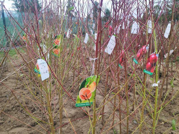 Drzewka Owocowe DUO Morela Early Orange + Brzoskwinia Inka GK