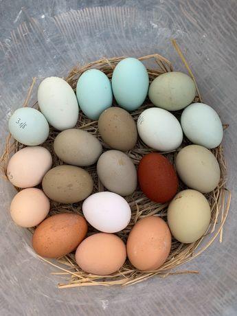 Ovos galados de várias cores