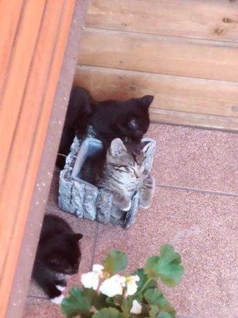 Kociaki od kotki przybłędy pilnie poszukują domków..