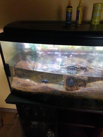Akwarium 240l półokrągłe