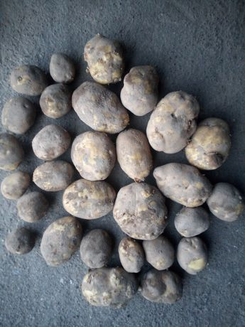 Ziemniaki VINETA ładny duży kaliber . Idealne do gastronomii ! Worek