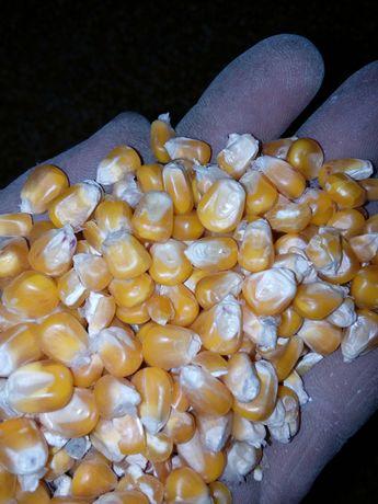 Kukurydza drobna, pszenica, śruta