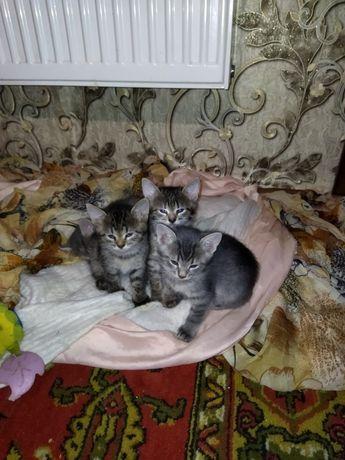 Милые котики ждут свою семью! Только в хорошие руки