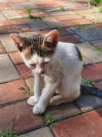 Помогите котёнку найти дом!