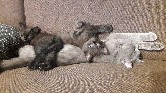 Котята. Очень игривая и пушистая