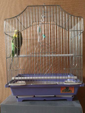 попугай за 100 и клетка
