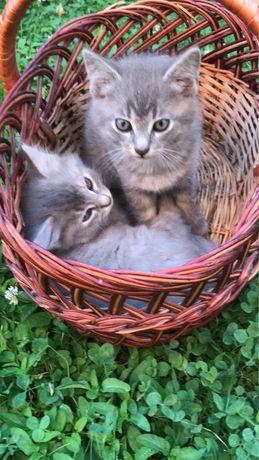 Кошеня котенок киця