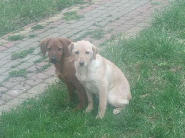 Oddam psy 3 miesieczne