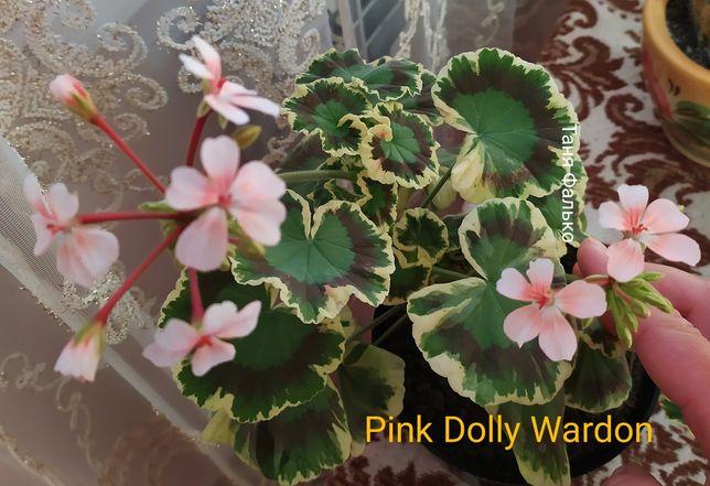 Pink Dolly Wardon