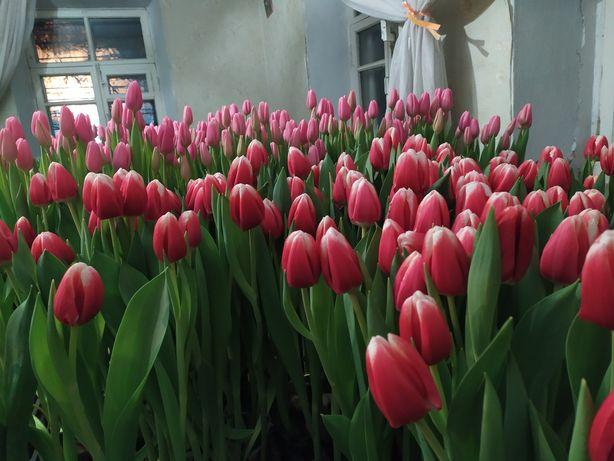 Продажа Тюльпанів з  Доставкою до дому