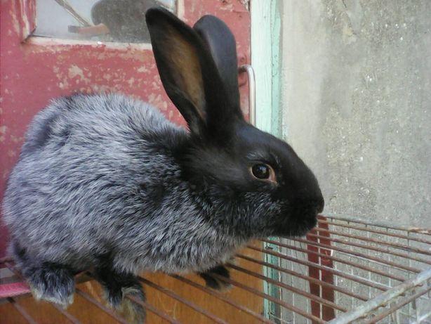 Продам Кроликов!