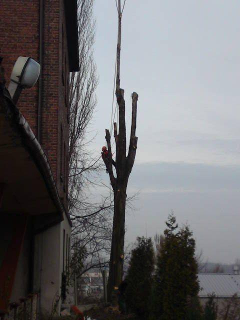 Wycinka drzew,Rębak,Frezowanie pni,Koszenie traw,Żywopłoty !!