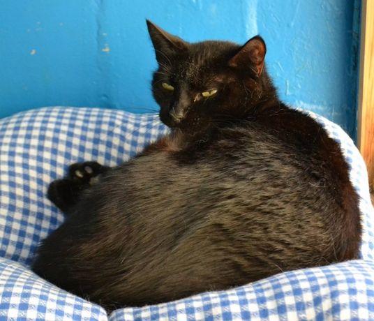 однорічна чорна кішечка дівчинка