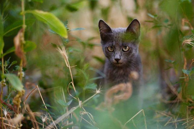 Серый котик в поисках дома