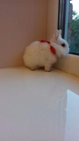 Продаються декоративні карликові кролики