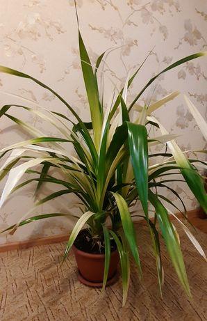 Офисный/комнатный вазон Пандус (кукуруза) двухцветный