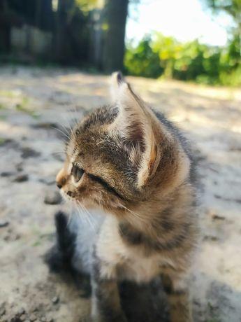 Кошенята шукають домівку !