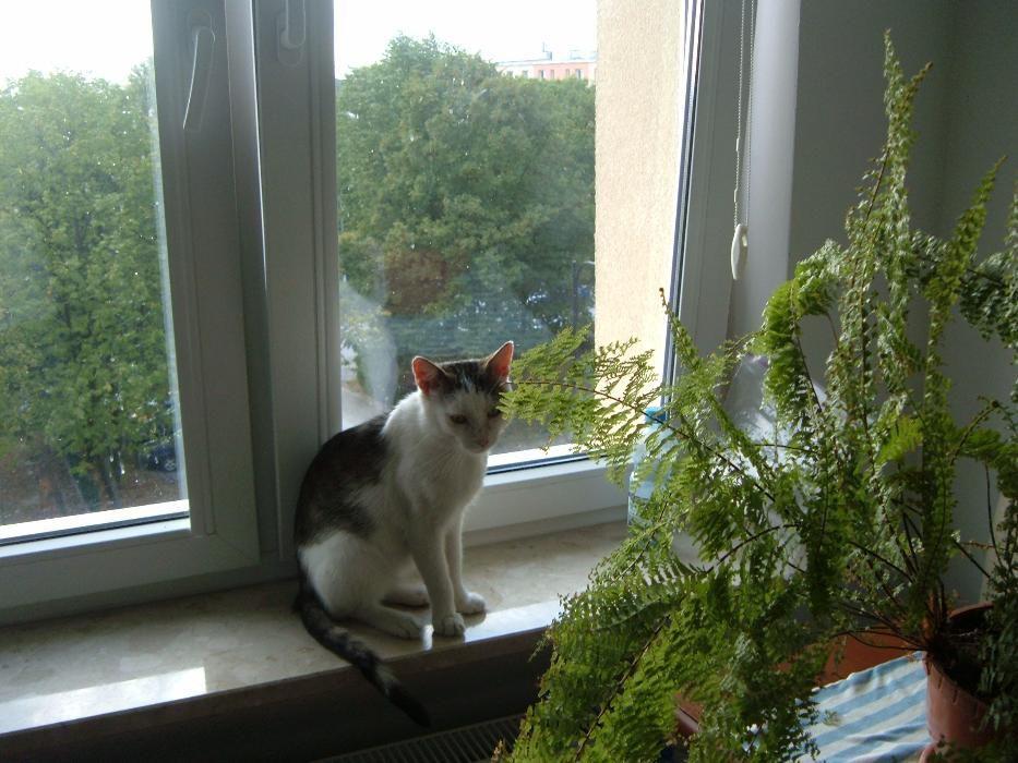 Zaginął kot Lucuś!!! Busko-Zdrój.Nagroda za znalezienie!!!