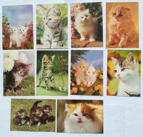 Pocztówki Koty Kot domowy rasowy, wyd. Poligrafia, Instytut Alberta