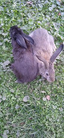 Продаю кролики)) Простюхи.