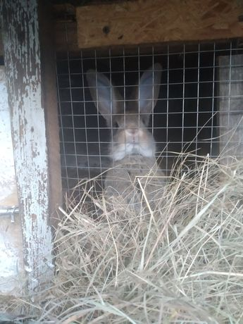 Кролики ризних порид
