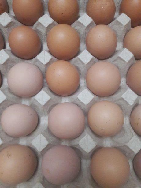 Инкубационное яйцо бройллер КОББ 500