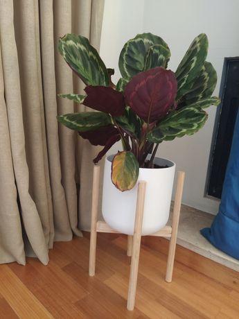 Vaso com suporte em madeira
