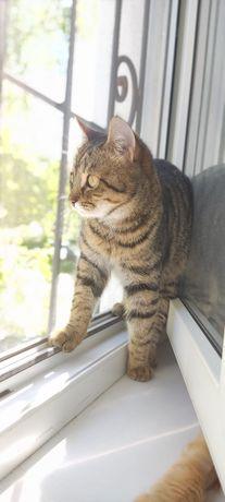 Ищем хозяев новых старых для молодой кошечки
