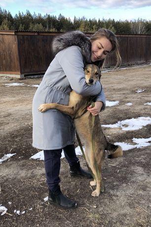 Собачка девочка очень ищет семью