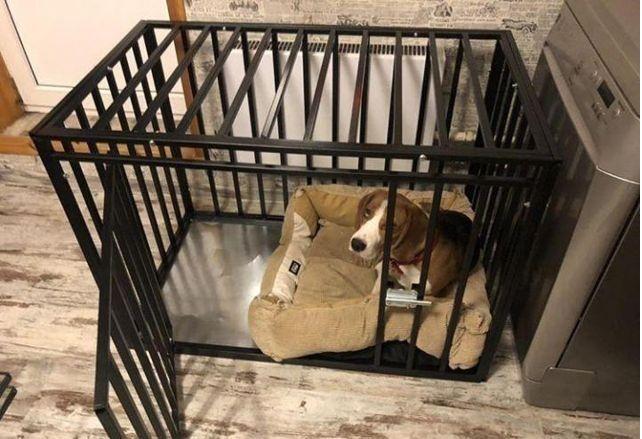 Вольеры для собак усиленные в квартиру с доставкой и установкой.