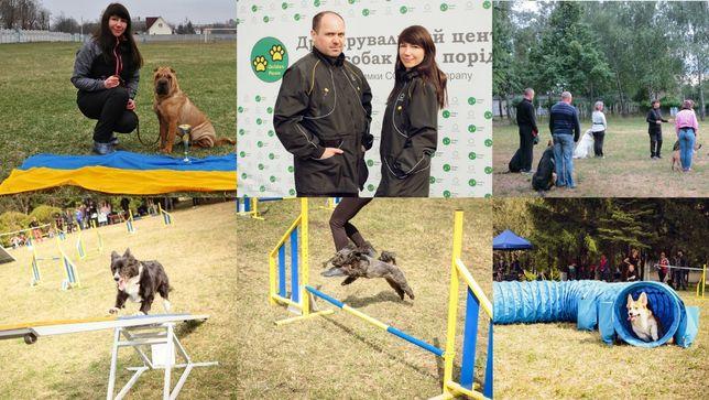 Дрессировка собак любых пород: послушание, спорт с собакой (аджилити).