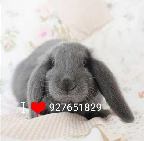 Vendo kit completo coelhos anões orelhudos