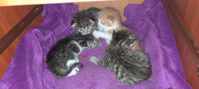 ZAREZERWOWANE kociaki szukają domu