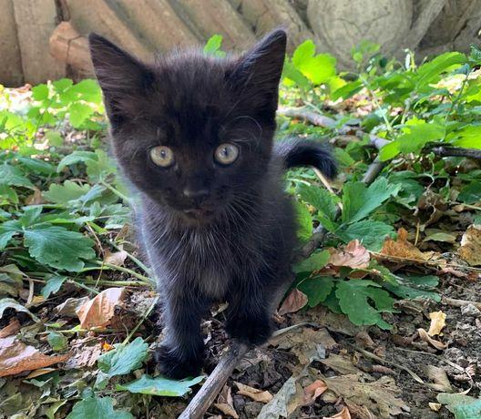 Котенок ищет дом и мечтает обрести семью