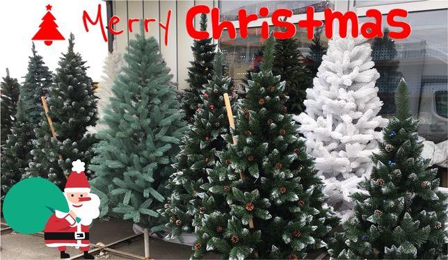 ЛИТАЯ- БУКОВЕЛЬСКАЯ ЕЛЬ\Сосна !Новогодние Елки и Сосны!1м-3м! ХИТ