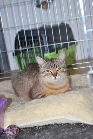 Klara - Młoda kotka , WYSTERYLIZOWANA