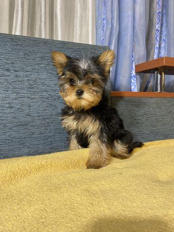 Маленький собачка с большим сердцем!