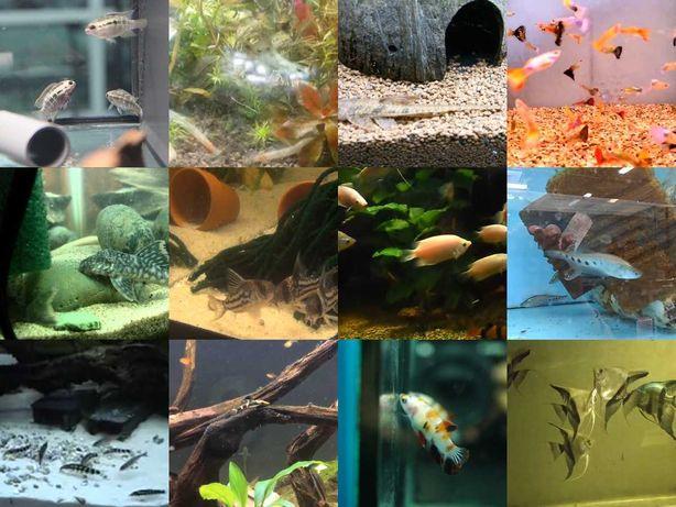 Ryby różne gatunki mix
