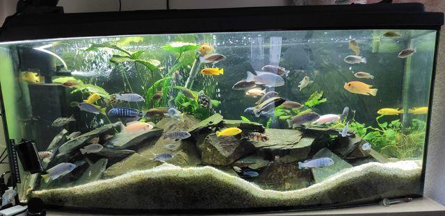akwarium panoramiczne 240l zamiana