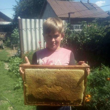 мед (Липа, соняшник)