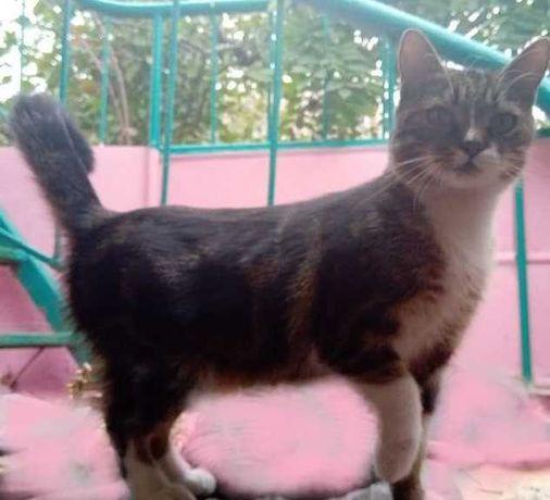 """Необыкновенно умная  и ласковая молодая кошка с глазами """"учительницы"""""""