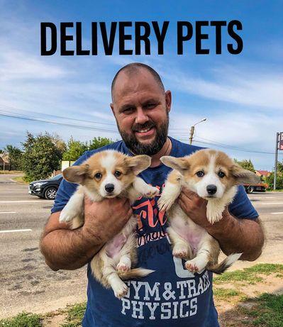 перевозка животных, delivery pets.